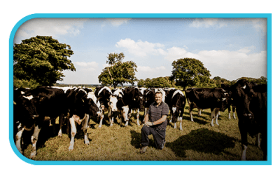 Brooklet Farm Donald Tyson Farm Grid Left Ae0a1e3554826ba30ae27db4229305d3