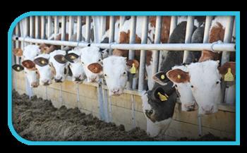 Storeton House Farm Grid Left 595db55f509ac122bb310256597e6e8f